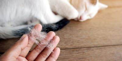Haarausfall bei Katzen – Ursachen und Therapien