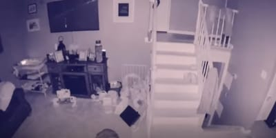 ghost dog standing on stairs