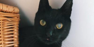 zaginiony czarny kot