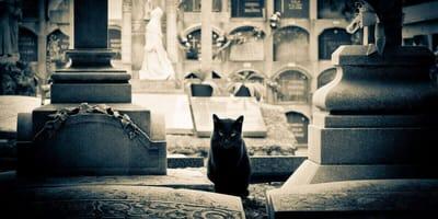 gatos viven cementerios tumbas