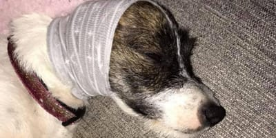 Does your dog hate fireworks? Owner shares homemade trick to end dogs' nightmare