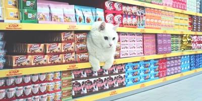 pubblicità di un gatto che esce da uno scaffale