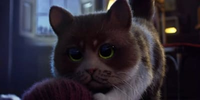 pelicula halloween niños gato
