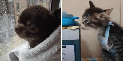 perro y gato confinados