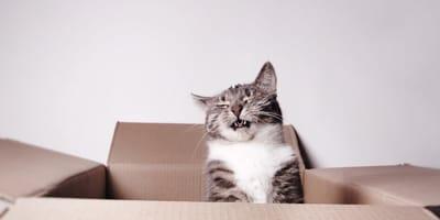 ¿Qué produce alergia en los gatos?