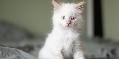 Namen für weiße Katzen oder weiße Kater