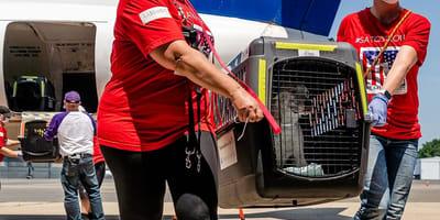 perros-rescatados-puerto-rico
