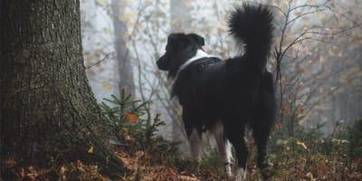 Pies w lesie.