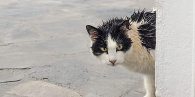 """Una pericolosa """"moda"""" impazza tra i gatti randagi"""