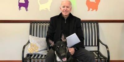 joe biden with pet dog