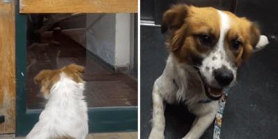 Pareja sigue a un perro hasta su casa: un letrero en la puerta les rompe el corazón