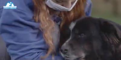 Covid-19 e animali: aiuti per chi è in isolamento (Video)