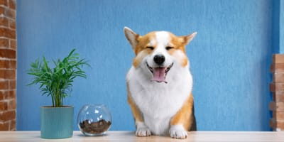 Pet Care Services: What you need and what to look for