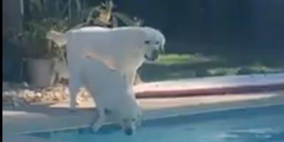 cani in piscina