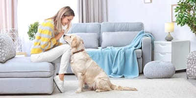 How to choose a trustworthy dog sitter