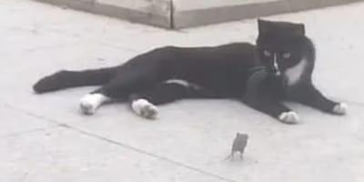 Ten filmik podbił sieć: mysz, która poluje na kota