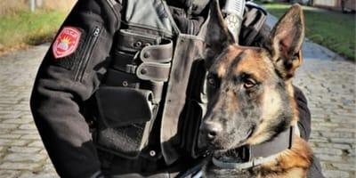 Pies policyjny Lonar.