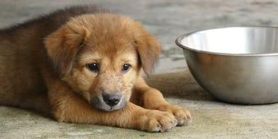 Warum trinkt mein Hund kein oder zu wenig Wasser?