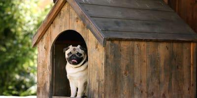 casetas perros pug
