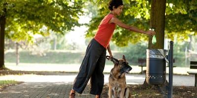 Psia kupa – co można z niej wyczytać o zdrowiu pupila?