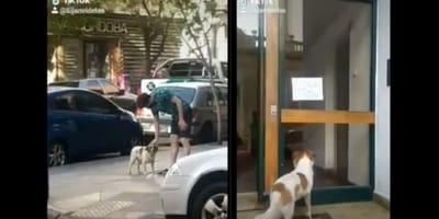 ragazzo accarezza cane randagio e cane guarda cartello su portone