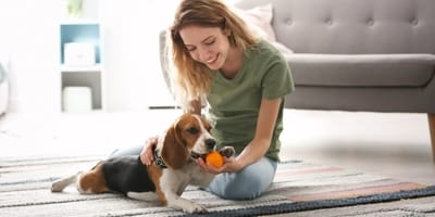 What to prepare when you're welcoming a pet sitter at home