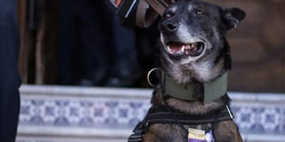 marck-perro-rescatista