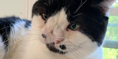gatto con malformazione