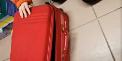 Sie findet einen herrenlosen Koffer: Beim Öffnen gefriert ihr das Blut in den Adern!