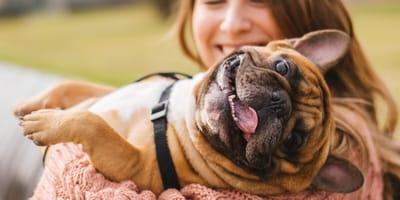 ¿Cómo puedo reforzar el sistema inmunológico de mi perro?