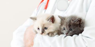 Cómo curar la gastroenteritis en gatos: consejos de nuestra veterinaria
