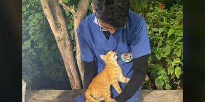 gatto rosso sulle ginocchia di infermiere egiziano ahmed flaty