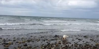 Long shot of spaniel Leia and baby porpoise