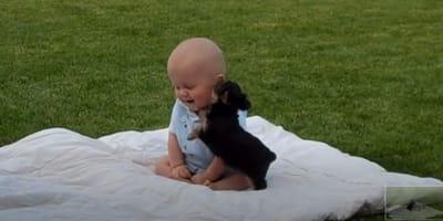Dziecko i szczeniaczek yorka