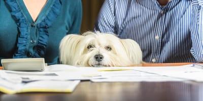 Was kostet ein Hund im Monat? Damit müssen Sie rechnen