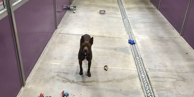 Schronisko organizuje dzień otwarty: wszystkie psy zostają adoptowane, z wyjątkiem jednego...