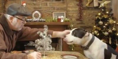 Czy w tym roku jedynymi towarzyszami starszych osób podczas świąt, będą ich zwierzaki?
