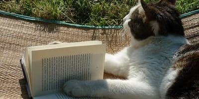 gatito libro