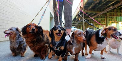 How to find a good dog walker