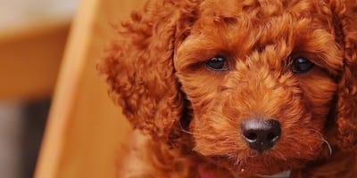 Primo cane positivo al Covid a Bitonto: l'Enpa chiarisce