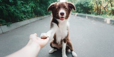 How to introduce a stranger to your dog
