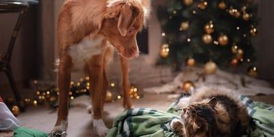 pies i kot pod choinką