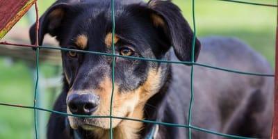 Le adozioni di cani e gatti sono ancora possibili in questo periodo?