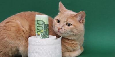 Wie viele Mäuse sind fällig? Monatliche Kosten für Katzen