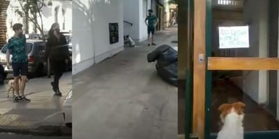 perro-busca-casa