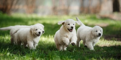 How to socialise a puppy