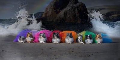 Osiem psow w teczowych kolorach na tle skały