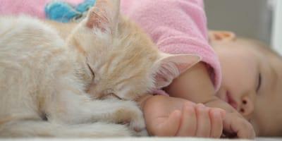 Was tun, wenn das Baby allergisch auf die Katze ist?
