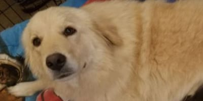 Dog gets second chance at motherhood after losing her 7 puppies in a fire
