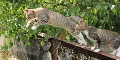 Cats jumping off wall